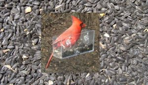 BLACK OIL SUNFLOWER SEED (1 pound) and NEW Window Bird Feeder