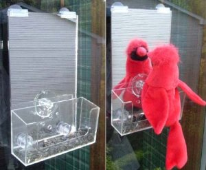 VIEW WILD BIRDS UP RIDICULOUSLY CLOSE WITH ONE WAY MIRROR OR MIRRORED BIRD FEEDER