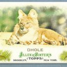 "2011 Topps Allen & Ginter Baseball Mini Animals in Perl ""Dhole"" #AP7"