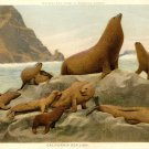 California Sea Lions~Milwaukee Public Museum Group~PC
