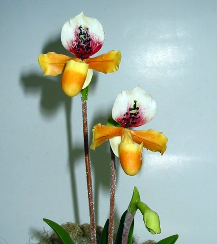 Handmade Lady Slipper Orchid YellowBrown with Red Flower for Home Decor