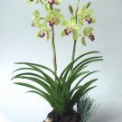 Green Cymbidium Orchid Home Decor Handmade Flower - Luna Clay