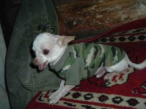 Army  Green Camou T-Shirt for T-Cup size Dog FREE USA SHIPPING!