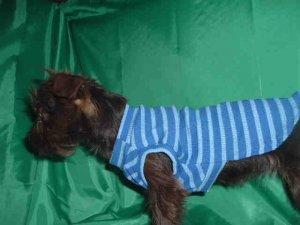 BLUE RIB KNIT STRIPED T-SHIRT FITS T-CUP SIZE DOG FREE USA SHIPPING