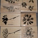 Stampin Up Petal Prints