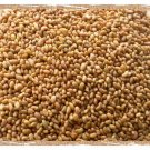 Alfalfa seed whole, Cert. Org. 1 Pound