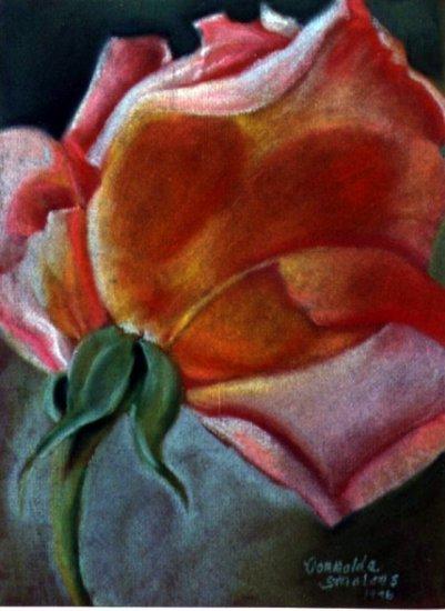 Rosebud Pastel Drawing by Donnalda Smolens