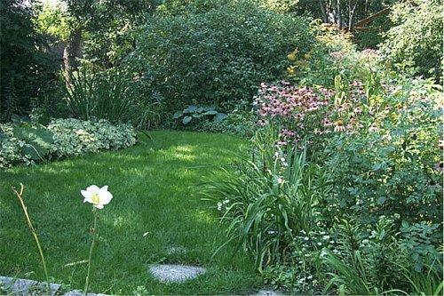 Alternative Lawn Designs