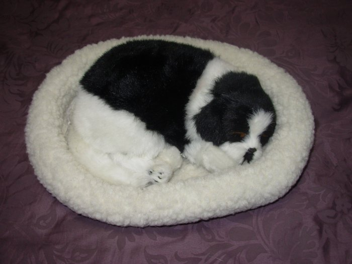 Pet Nap Border Collie Puppy Realistic Breathable Sleeping Dog Suffed Animals
