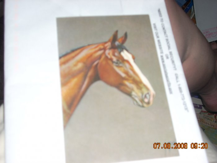 horse postcard printed switzerland