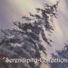 (Kyo Kara Maou) Close up tree with snow production background