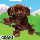 Chocolate Lab Webkinz