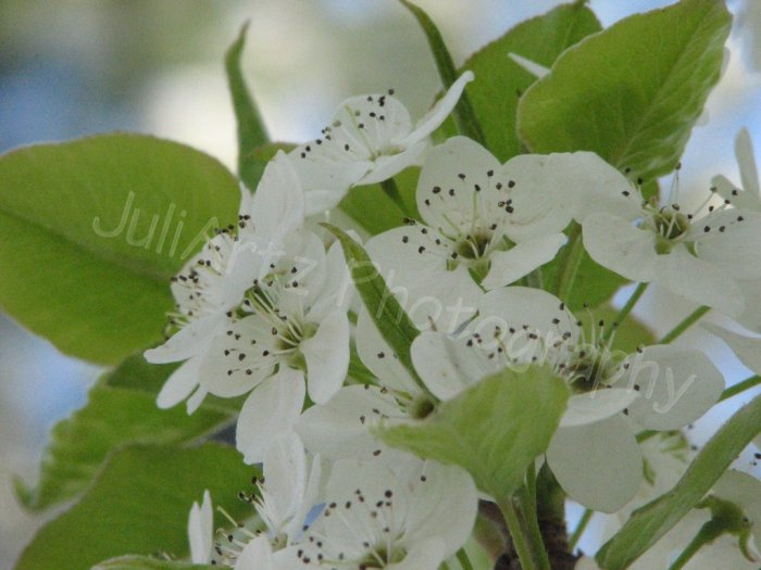 LITTLE CLUSTERS - photographic art - 8 x 10 photographic print