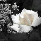 Romance in Black & White - 8 x 10 Original Photographic Print