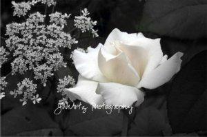 Romance in Black & White - 8 x 10 Original Photographic Print