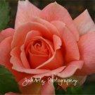 La Fleur De La Passion - 8 x 10 Original Photographic Print