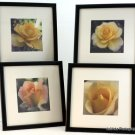 Rose Art Prints Set of 4