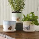 Butterfly Meadow Windowsill Garden