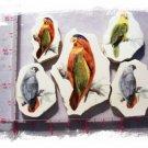STRIKING~ *COLORFUL PARROTS* 5 Mosaic Tiles FOCALS