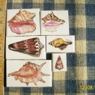 Mosaic Tiles~*SEA SHELLS*~ 6 FOCALS~Kiln Fired