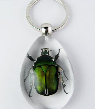 Real Insect Bug Amber Key Chain keyring Lvbao Beetles