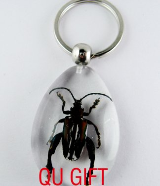 Real Insect Bug Amber Lucite Key Chain Keyring Beetle