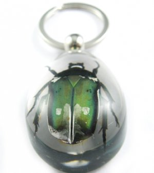 Real Insect Bug Amber lucite Key Chain Green Beetle