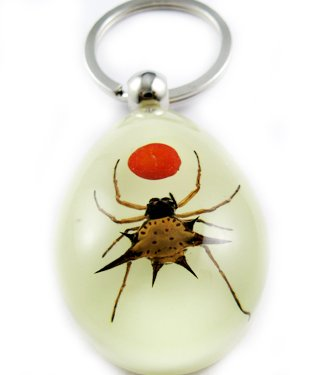 Real Insect Bug Amber Key Chain Keyring Spider&Red Bean