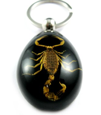 Black Real Insect Bug Amber Lucite Key Chain Scorpio