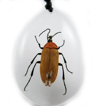 Insect Bug Amber Necklace Pendant Small Brown Beetle