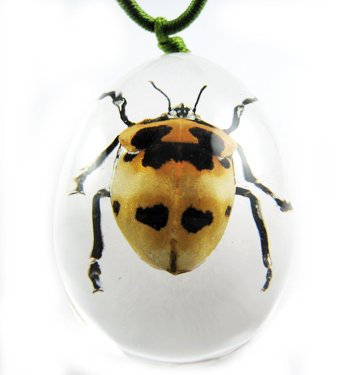 Insect Bug Amber lucite Necklace Pendant Ladybug New