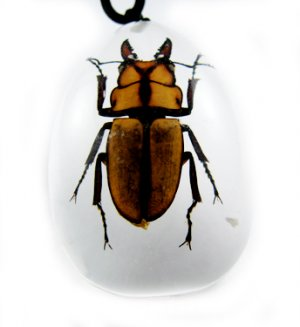 Insect Bug Amber lucite Necklace Pendant Hexapod New