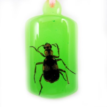 Green Amber Real Insect Bug Charm Key Chain Keyring NO.4