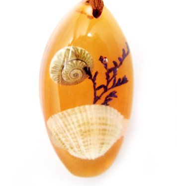 Amber Real Seashell Necklace Pendant Bead Multi-color NO.5