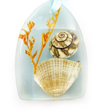 Amber Charm Real Seashell Necklace Pendant Bead Multi-color NO.1
