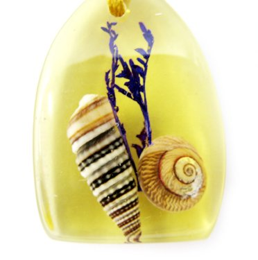 Amber Charm Real Seashell Necklace Pendant Multi-color NO.9