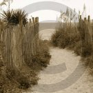 Beach Access 31 - 4009 - 11x17 Framed Photo