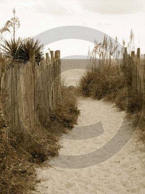 Beach Access 31 - 4009 - 8x10 Framed Photo