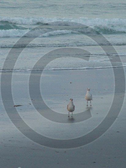 Beach Regulars - 12018 - 11x17 Framed Photo