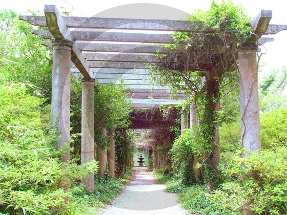 The Pergola - Airlie Gardens - 8017 - 8x10 Framed Photo
