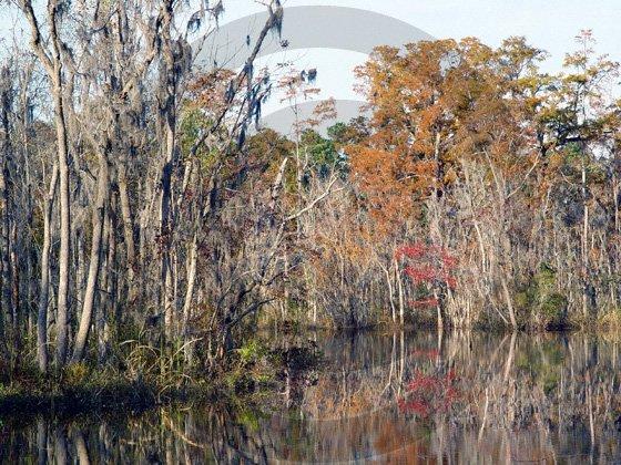 Fall in South Eastern North Carolina - 11001 - 11x17 Framed Photo