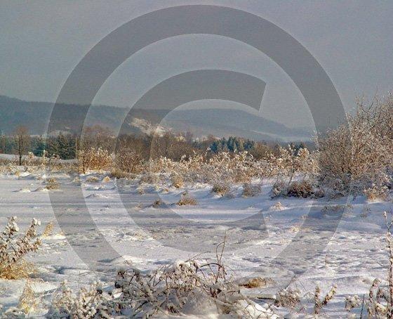 Blue Snow Morning - 11003 - 11x17 Framed Photo