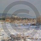 Blue Snow Morning - 11003 - 8x10 Framed Photo