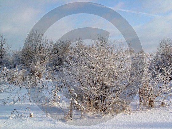 Cold Blue Snow Morning - 11005 - 11x17 Photo
