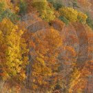 Fall Leaves - Ostego Lake - 11012 - 11x17 Framed Photo