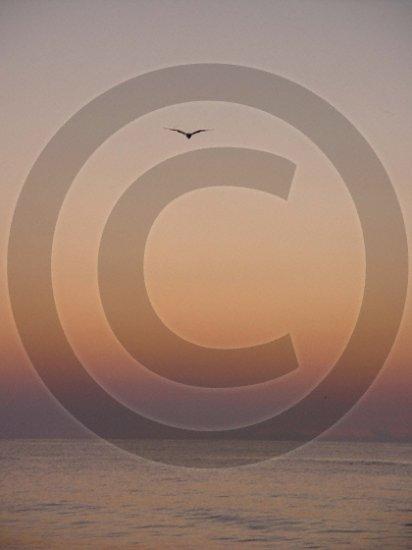 Let Your Spirits Soar - Johnnie Mercer's Pier - 1003 - 8x10 Framed Photo