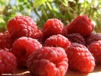 Rasberry Swirl