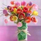 Todd Oldham™ Hosta Tulips