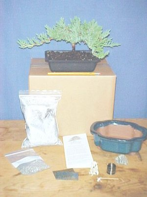 Bigger Pro Nana Juniper Bonsai Tree Kit
