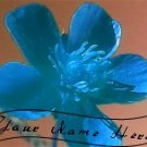 Ebay Store Logo Blue Pink Flower Dress Up your Ebay Store Add your Store Name!!
